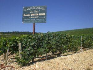 Sauvignon Blanc Of Chardonnay